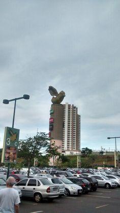 Campinas/ cidade das andorinhas SP- BR  02/2015