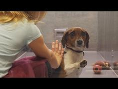She Bends Down Next To A Dog In The Shelter. The Next Part? Oh, My Heart! -