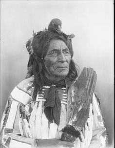 Рortrait of Long Otter, a Crow man, wearing a bird as a headdress. Collection Richard Throssel. Date Original:1902-1933.  University of Wyoming. American Heritage Center.