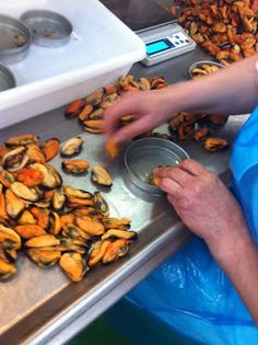 Picking and canning mussels Food Manufacturing, Mussels, Preserving Food, Fish And Seafood, Meat, Canning, Recipes, Life
