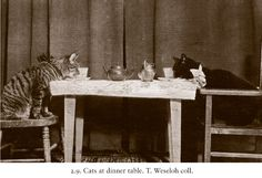 """New Book """"The Photographed Cat"""" Proves We've Been Dressing Up Cats for CENTURIES 