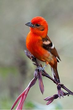 Lovely Colourful Bird....♥