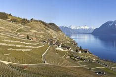 The tiny village of Epesses in Lavaux, Switzerland - Swiss Alps, Winter Nails, Switzerland, Vineyard, Mountains, Landscape, Travel, Outdoor, Blog