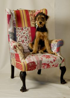Dizzy on the Squint Bennison chair