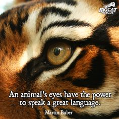 the lady or the tiger quotes in the story