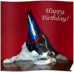 Happy Birthday from your Border Collie