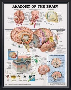 Parts of the brain really like this mapping  Interesting
