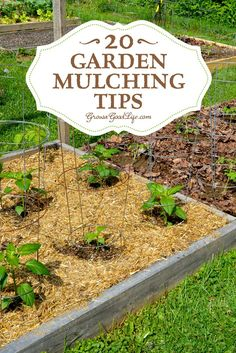 Mulching is one of the best things you can do for your garden. A generous layer of mulch over the soil surface will suppress weeds, retain moisture, and provide and soil enrichment as it decomposes. Learn all about mulching your garden beds! Garden Compost, Garden Soil, Edible Garden, Lawn And Garden, Garden Beds, Garden Landscaping, Vegetable Garden Mulch, Landscaping Ideas, Vegetable Boxes