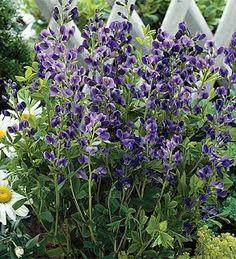 Deer Resistant Plants - Top 10 Plants For Your Landscape