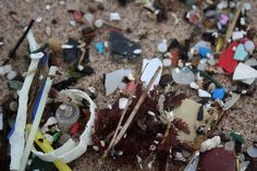 The Last Straw: Why Do Oceans of Disposable Plastic Go Largely Unaddressed?  Dianna Cohen, CEO of Plastic Pollution Coalition, discusses the detrimental environmental impacts of single-use plastic straws.