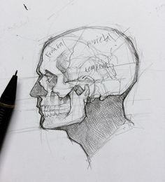 "4,641 Me gusta, 12 comentarios - Efrain Malo (@maloart) en Instagram: "" #graphite #mechanicalpencil #sketching #skull"""