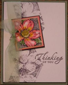 Poster: kzimbie    The layout is cased.  I finally found a way to use the flowers I colored the day my pencils came!      Stamps: Nature's Wonders, Sincere Salutations  Paper: US White, Mellow Moss, Cameo coral, Black, Barely Banana  Ink: Black  Accessories: Celery Ribbon  Techniques: colored pencils and gamosol