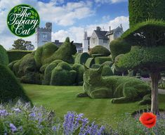 Master tells me that now is a time for quiet contemplation. I'm good at that myself, and GK, apprentice Topiary Cat, is learning. Here we are at Levens Hall in Cumbria, an Elizabethan house and gardens famous for its topiary.