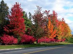 home_snohomish fall trees