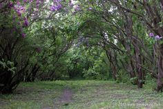 Purple and green forest glade
