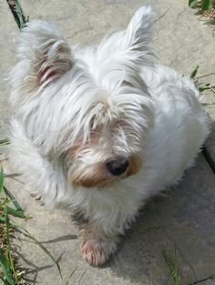 Smile Willow you're on Westie cam