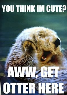 In Defense Of Otters - Funny Animal Quotes - - You think Im cute? Aww get otter here The post In Defense Of Otters appeared first on Gag Dad. Animal Captions, Animal Puns, Funny Animal Quotes, Cute Funny Animals, Funny Animal Pictures, Funny Cute, Funny Dogs, Cute Pictures, Funny Humor