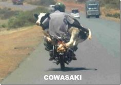 Cowasaki