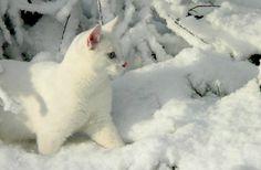 "pagewoman: ""Snow Cat ☆ ♡ ☆ """