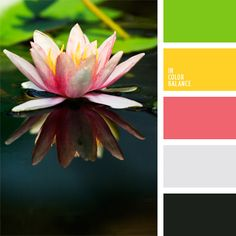Water lilies are one of nature's beauties. What better place to find a palette. Colour Pallete, Colour Schemes, Color Patterns, Color Combinations, Color Palettes, Color Harmony, Color Balance, Balance Design, Soothing Paint Colors