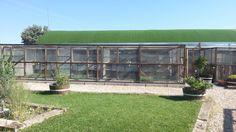 El techo verde de Gatosphera
