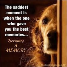 Golden Retriever Discover scruff The saddest moment is when the one who gave you the best memories.Becomes A MEMORY Animals And Pets, Cute Animals, Baby Animals, Wild Animals, Pet Sitter, Pet Loss Grief, Dog Quotes Love, Pet Quotes, Dog In Heaven Quotes