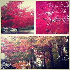 [Instagram @_kmbrly] Autumn is such a beautiful time of the year #autumn #colorful #nature