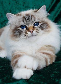diareea la pisica
