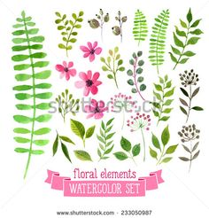Vector floral set. Colorful floral collection with leaves and flowers, drawing watercolor. Spring or summer design for invitation, wedding or greeting cards