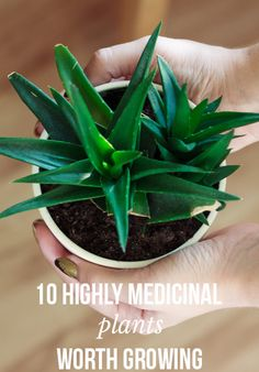 10 highly medicinal plants worth growing | massroots.com