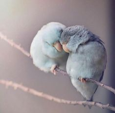 i am collect the cute couple images and couple love images for lovers & couples- images town Nature Animals, Animals And Pets, Baby Animals, Funny Animals, Cute Animals, Cute Birds, Pretty Birds, Beautiful Birds, Animals Beautiful