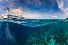Bonaire.AndyTroy.nlTumblr page