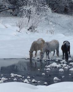 Horses of winter, Vosgesparis