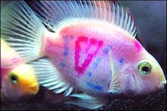 Fish tattoos picture