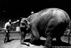 Soviet Circus, Warsaw by Greg Marinovich Warsaw, Filmmaking, Elephant, Photography, Animals, Cinema, Photograph, Animales, Animaux