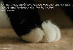 Die 28 besten Bilder von Zitate über Katzen   Quotes about cats