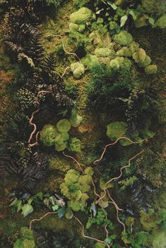 Untitled - Floor Plants - Ideas of Floor Plants - Forest floor Mother Earth, Mother Nature, Flora, Moss Garden, Forest Floor, Belleza Natural, Belle Photo, Natural World, Nature Photography