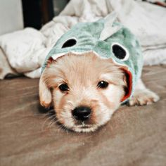 Super Cute Puppies, Baby Animals Super Cute, Cute Wild Animals, Cute Baby Dogs, Cute Little Puppies, Cute Little Animals, Cute Funny Animals, Baby Animals Pictures, Cute Animal Photos