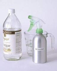 Natural Ant Repellent: Pour equal amounts of water and white vinegar into a spray bottle, and shake to mix. Then spritz the solution in water-resistant areas where ants are common, such as kitchen floors or the crevices in painted baseboards from which the pests often enter. You can also use the repellent outside, spraying patios, porches, and picnic tables before family and friends gather.