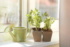 #Internorm #Blog #lifehacks #tomatoes #decoration #urban #indoorgardening #windowsill #windows #summer Window Sill, Lifehacks, Windows And Doors, Planter Pots, Blog, Ceiling, Indoor Gardening, Tableware, Modern