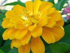 October Birth Flower...