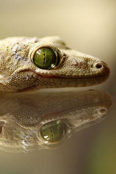 reptil - Animal -> Por: Angel Catalán Rocher <- Sígueme!