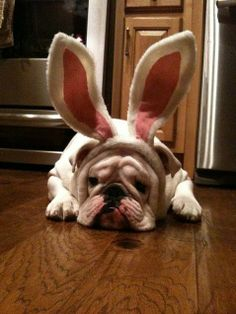 Happy Easter | BaggyBulldogs