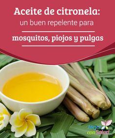 Aceite de citronela: un buen repelente para mosquitos, piojos y pulgas Además de utilizar el aceite esencial, también podemos aprovechar la propia planta como elemento decorativo en nuestro hogar y, a la vez, como repelente para las diferentes plagas de insectos
