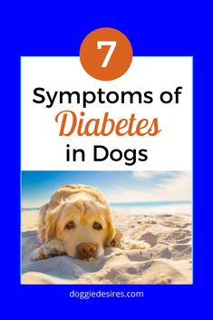 Are you worried that your dog may be showing signs of diabetes? Here are 7 symptoms of diabetes in dogs to watch out for. Dog Health Tips, Pet Health, Clipping Dog Nails, Puppies Tips, Diy Dog Treats, Sick Dog, Cool Dog Beds, Boxer Love, Diabetic Dog