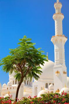 Garden tree, Sheikh Zayed Grand Mosque, Abu Dhabi, UAE