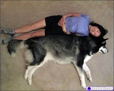 BIG DOGS = JUST MORE, A LOT MORE, TO LOVE  {Which one says - Am I really that big?}
