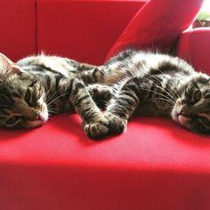 #cats # kitten # love
