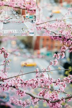 Blossoms in New York City! #nyc #travel #spring #cherryblossoms #newyorkcity #nyc #newyork #chelsea  www.mykeandteriphotography.com
