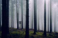 Moody and foggy woodlands in Germany Forest Photography, Fine Art Photography, Landscape Photography, Travel Photography, Foggy Forest, Autumn Forest, Great Fear, Nature Aesthetic, Great Backgrounds